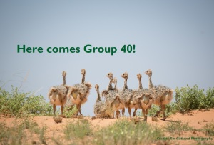 Group 40