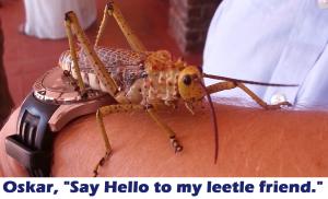 Leetle friend