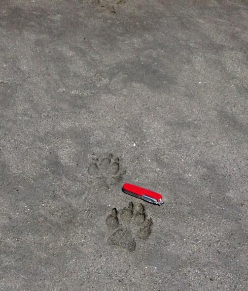 Hyena tracks II