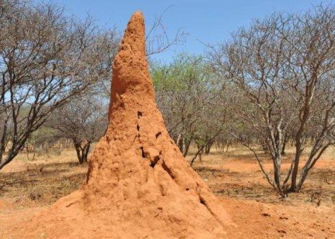 termite hill Namibia