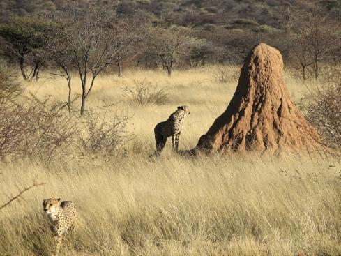 Termite_mounds_namibia