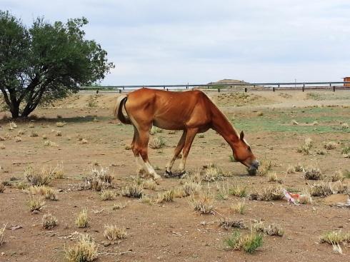 Tseiblaagte horse Jan 2016 (16)