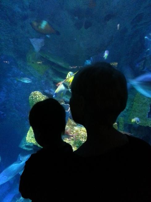 !Adin at Aquarium (21)