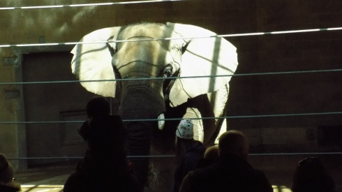 !Adin at Zoo (15)